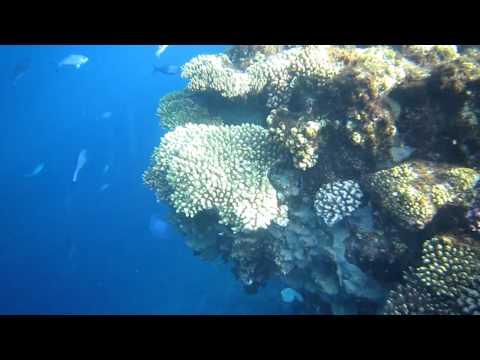 Фауна Красного моря