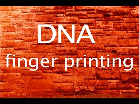 DNA fingerprints....best video