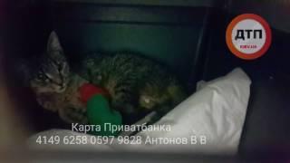 22.02.2017 ПАРАШУТИСТКА И БЕЛКА В КЛИНИКЕ РЫЖИЙ КОТ 2