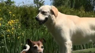 Собаки деревни Гитхорн приветствуют нас!
