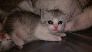 видео Уход за котятами