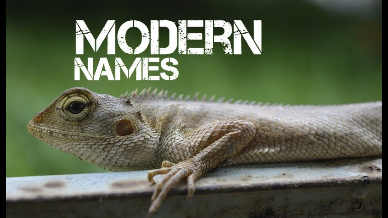 girl reptile pet names starting with v - YouTube