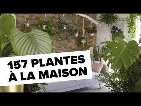Urban jungle: 157 plantes à la maison