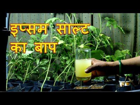 Epsom Salt Ka Baap Hai - Plant Micronutrients