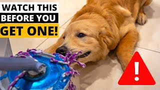 9 Things you MUST KNOW Before Getting a Golden Retriever!