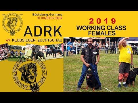 ADRK Klubschau 2019 - Working Class Females