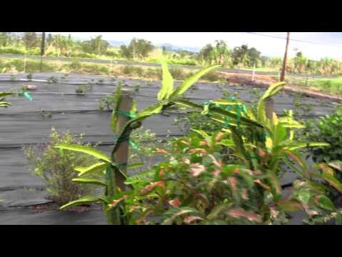 Puna Garden Project Continued
