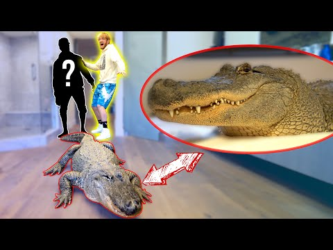 LIVE ALLIGATOR PRANK ON NEW ROOMMATE!