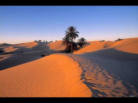 """""""Il mondo insieme"""" - Viaggi: Tunisia, il deserto che vive"""