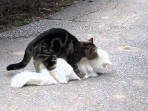 Mačička sexx