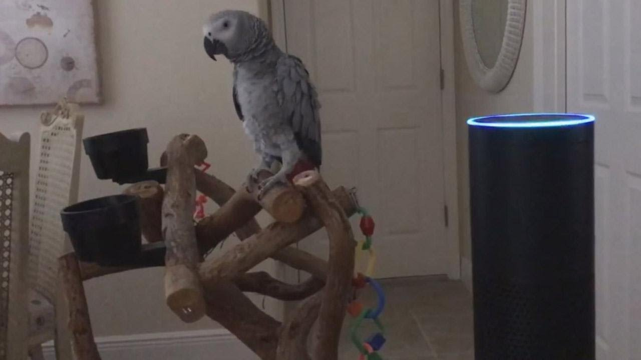 Parrot Gets A Kick Out Of Using Amazons Alexa To Turn On House Way Switch Power Into Light Lights