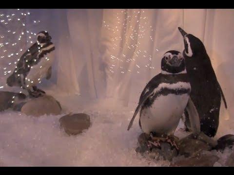 Christmas Town | Busch Gardens Virginia