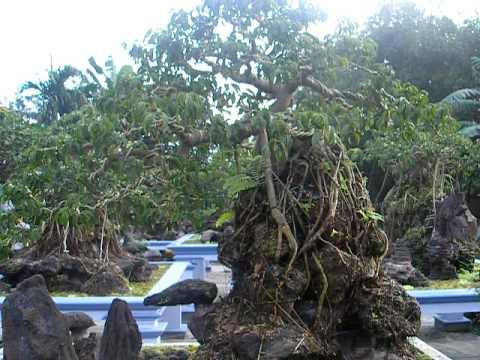 Vườn cây sanh kiểng Hoàng Minh - Bình Định 2012 (P1)