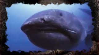 abismo do oceano as criaturas abissais do fundo do mar
