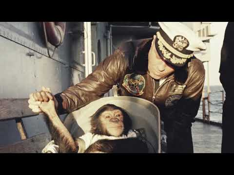 HAM was the first chimpanzee in space in 1961: vintage photos