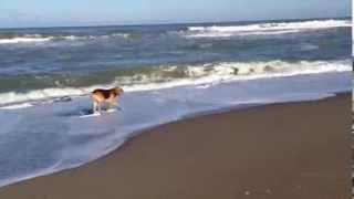 Kocaali sahilimizde 4 Aralık Çarşamba günü sabah yürüyüşümde çektiğim video..