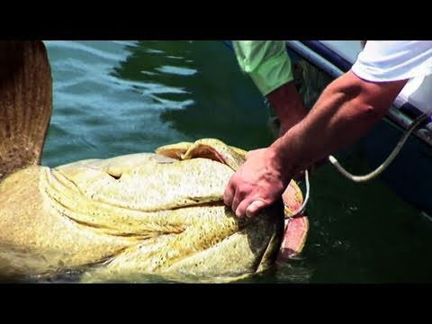 Grouper Fishing Real Big Fish: Army Soldier KO's Goliath Grouper Fish Video! Chew On This