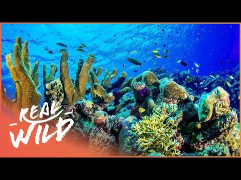 Spectacular Coral Reefs In Florida   Alien Reef   Real Wild  Shorts