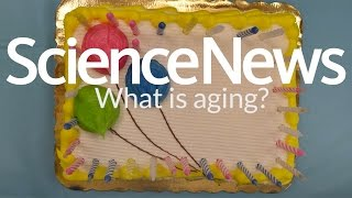 What is aging? | Science News