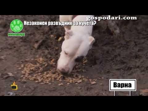 Незаконен развъдник за кучета във Варна измъчва животните?