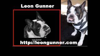 Leon Gunner Bulldog Crazy
