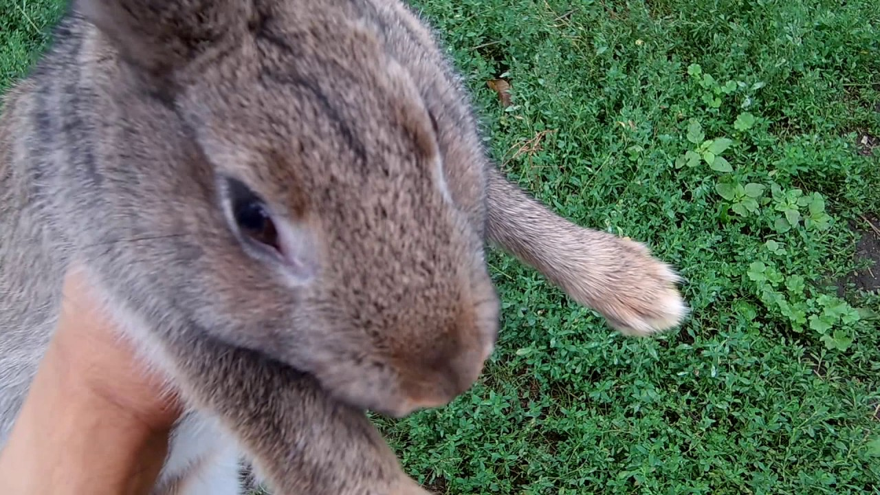 Кролики разведение и уход / Выращивание кроликов - YouTube