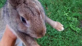Кролики разведение и уход / Выращивание кроликов