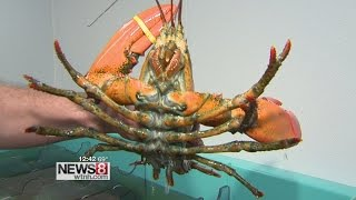 Lobster Prices High But Don't Put Away the Bib Yet