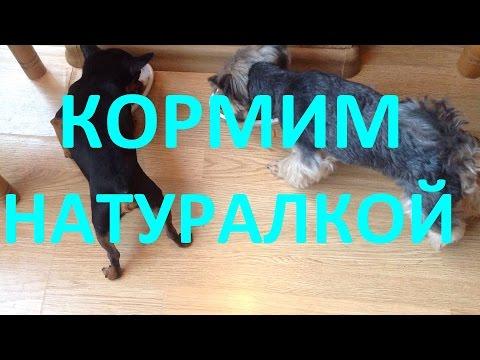 Как варить куриные желудки для собаки