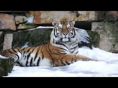 18.02.2017 Riga Zoo - Rīgas Zoodārzs - Рижский зоосад
