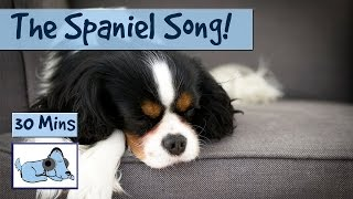 1 Hour! The Spaniel Song! All the Music You'll Need for Your Spaniel! 🐶 #SPANIEL01