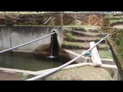 Crianza de truchas piscigranja el roble pulan santa for Crianza de truchas en lagunas