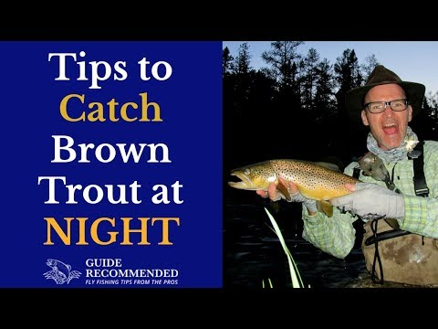 Catch Trout At Night