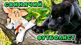 """Как сохранить природу 😁 Большие кошки ✔ Эко сумки """"Свинья"""""""