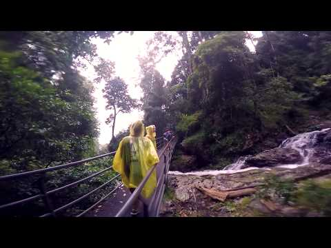 Dorrigo-Nationalpark / Im Regenwald campen / Work and Travel Australia 2014/15 #16 - dorrigo