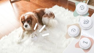 TEACHING OUR DOGS TO TALK?! // Dog Training Talking Buttons HiJoeyCo