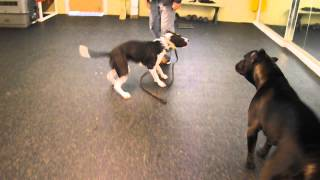 Olympia Kennels / Dog Aggression / Behavior Modification (chester Nh) Mo Part Ii
