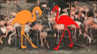 San Diego Zoo Kids - Flamingos