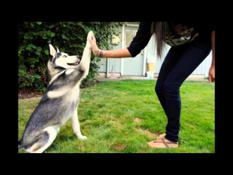Best Dog Training Tips - Learn Dog Training Tips For Jumping Hunting Attack
