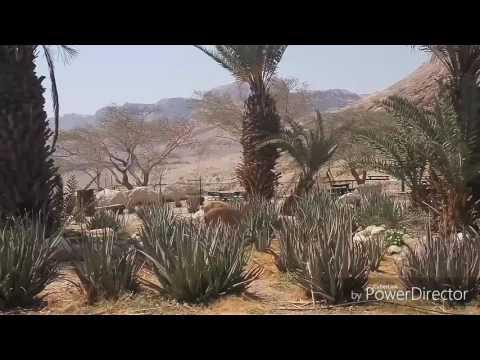Ibex In Ein Gedi Field School יעלים בביסש עין גדי Mothernature\u0026luck©