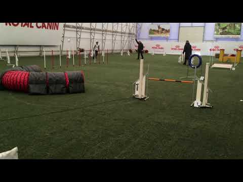 bearded collie Roope Agility A3, Jumping course , Maardu 31.03.2018