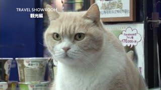 バニラエア×DeNA「SHOWROOM」 TRAVEL SHOWROOM 【観光編】 「レポーター...