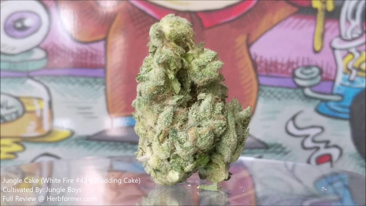 Jungle Boys] Jungle Cake - Herb•form•er