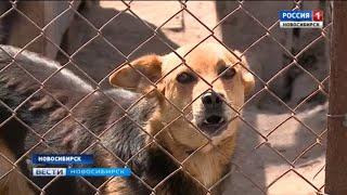 Новосибирский приют для бездомных животных страдает от нехватки сотрудников