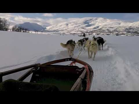 Tromso Sledge Ride