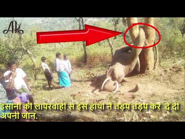 घंटो तक दर्द से तड़पता और चिंघाड़ता रहा हाथी, लेकिन किसी का भी नहीं पसीजा दिल...