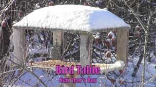 Bird Table New Year's Day