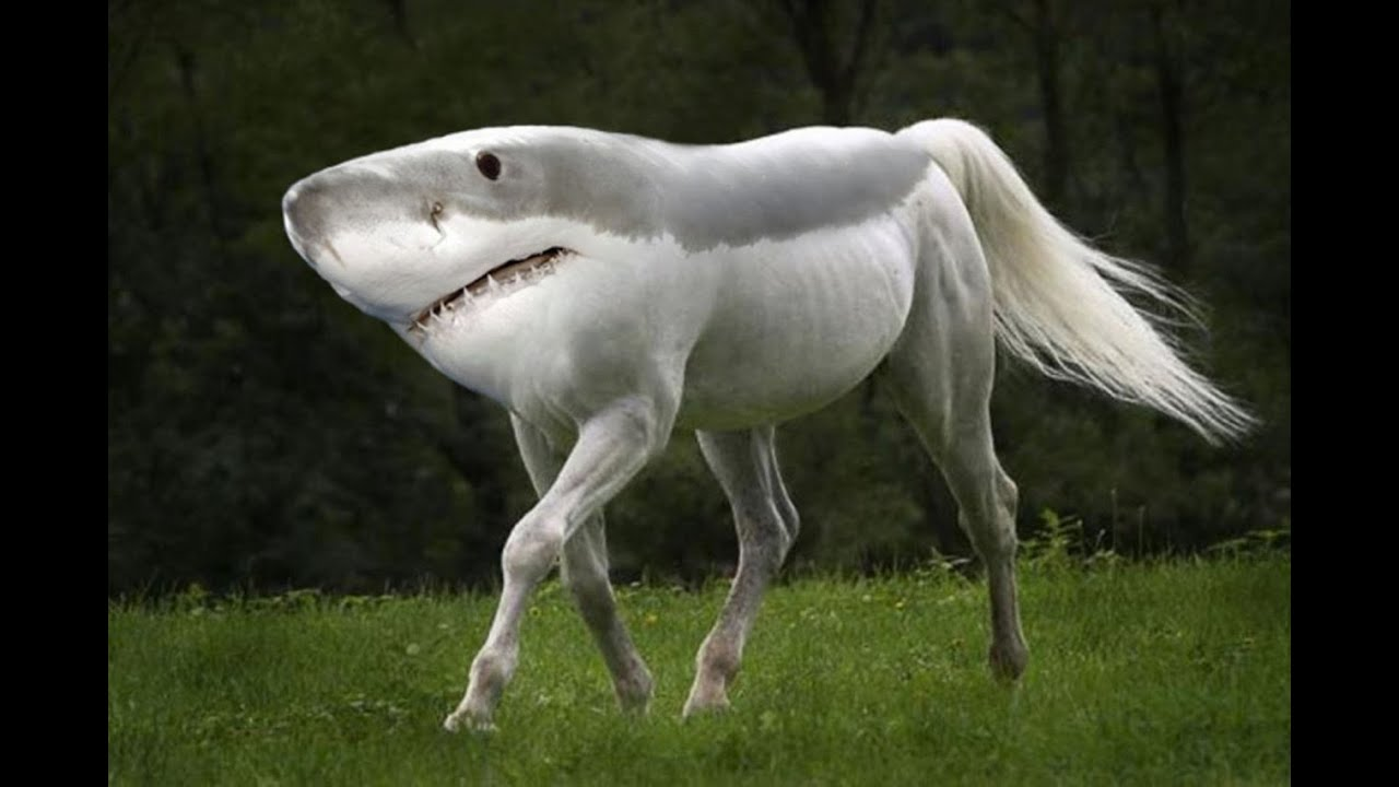 Weird Mutated Animals 11