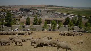 See the animals that overlook Sonoma Raceway