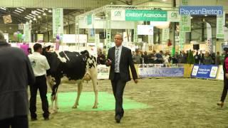 Terralies 2015 - Le hall des concours animaux